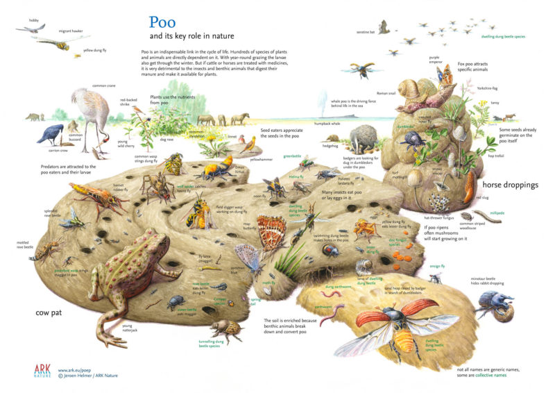 Poo and its key role in nature.