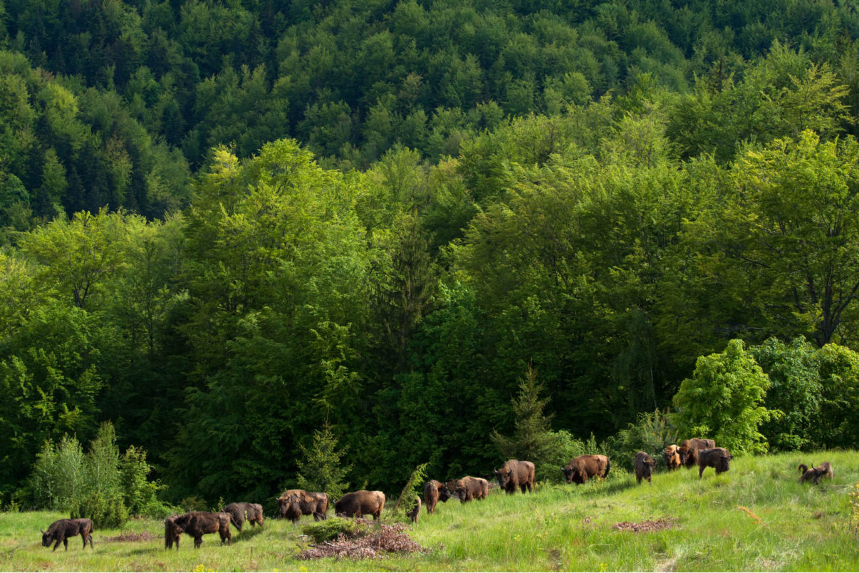 Forests and grasslands functioning as one coherent ecosystem in Romania's Southern Carpathians.