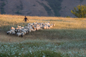 Shepherd in the Central Apennines