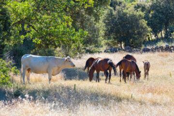Greater Coa Valley, Western Iberia, Rewilding Portugal, Rewilding Europe, Portugal, Europe